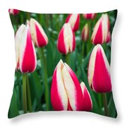 Tulips 7 Throw Pillow