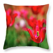 Tulips At Honor Heights Throw Pillow