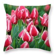 Tulips - Candy Apple Delight 02 Throw Pillow