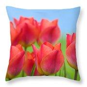 Tulips Close Up  Throw Pillow