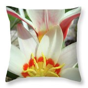 Tulips Flowers Artwork 1 Tulip Flower Art Prints Spring Floral Art White Tulips Garden Throw Pillow
