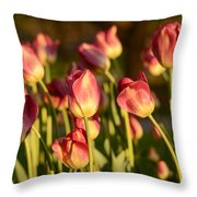 Tulips In Public Garden Throw Pillow
