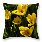 Tulips In Sping Throw Pillow