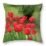 Tulips In Spring 3 Throw Pillow