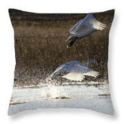 Tundra Swans Take Off 2 Throw Pillow