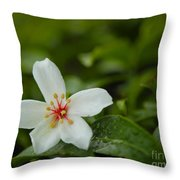 Tung Flower On Tea Tree Throw Pillow