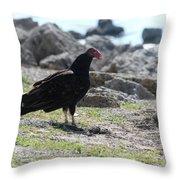 Turkey Buzzard  Throw Pillow