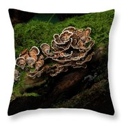 Turkey Tail Throw Pillow