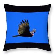Turkey Vulture - 2 Throw Pillow