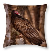 Turkey Vulture On A Old Birch Throw Pillow by Bob Orsillo