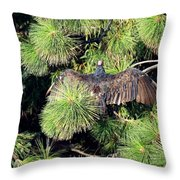 Turkey Vulture Spread Two Throw Pillow