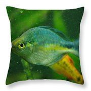 Turquoise Rainbowfish 2 Throw Pillow