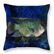 Turquoise Texas Cichlid  Throw Pillow