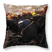 Turtle At Deer Creek Throw Pillow