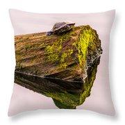 Turtle Basking Throw Pillow