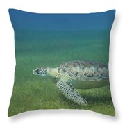Turtle Cove Glide Throw Pillow