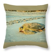 Turtle Day Throw Pillow
