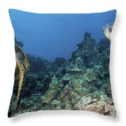 Turtle Panorama Throw Pillow by Dave Fleetham - Printscapes