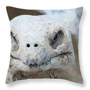 Turtle Smile  Throw Pillow