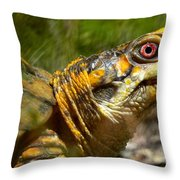 Turtle-turtle Throw Pillow by Stephanie  Varner