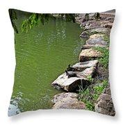 Turtles 7832 Throw Pillow