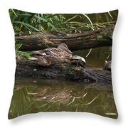 Turtles And A Duck Throw Pillow