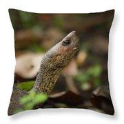 Turtle's Neck  Throw Pillow