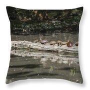 Turtles Sunning On A Log Throw Pillow