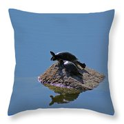 Turtles Tanning Throw Pillow
