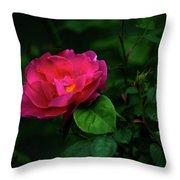 Twilight Rose Throw Pillow