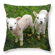 Twins - Spring Lambs Throw Pillow