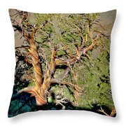 Twisted Bristlecone Throw Pillow
