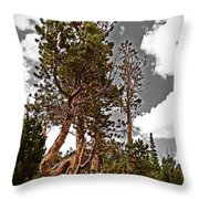 Twisted Pines Throw Pillow