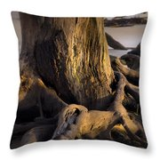 Twisted Revealed  Throw Pillow