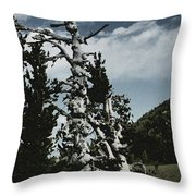 Twisted Whitebark Pine Tree - Crater Lake - Oregon Throw Pillow by Christine Till