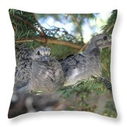 Two Baby Morning Dove's Throw Pillow