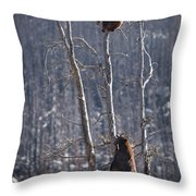 Two Bears Up A Tree Throw Pillow