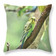 Two Beautiful Yellow Parakeets In A Tree Throw Pillow