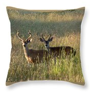 Two Black-tailed Deer In Meadow Grass Throw Pillow