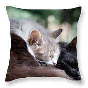 Two Cats  Sleeping  Throw Pillow