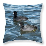 Two Coots Throw Pillow