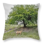 Two Cows And A Tree Throw Pillow