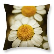 Two Daisies Throw Pillow