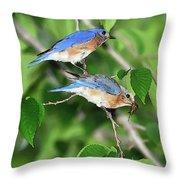 Two Eastern Bluebirds Throw Pillow