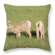 Two Ewes In The Badlands Throw Pillow