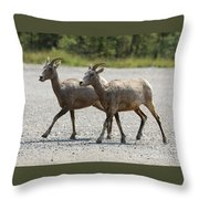 Two Female Longhorn Sheep Throw Pillow