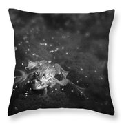 Two Frogs In A Pond Mating By Laying Throw Pillow by Roberta Murray