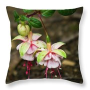 Two Fushia Blossoms Throw Pillow by Douglas Barnett