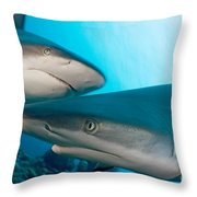 Two Gray Reef Sharks Throw Pillow by Dave Fleetham - Printscapes