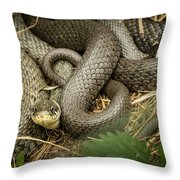 Two Intertwined Grass Snakes Lying In The Sun Throw Pillow